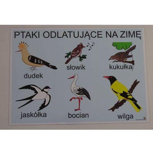 Bystra sowa Ptaki odlatujące na zimę- plansza demonstracyjna