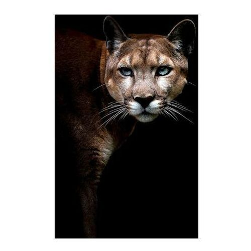 Obraz Glasspik Couguar Animal 70 x 100 cm (5902841504714)