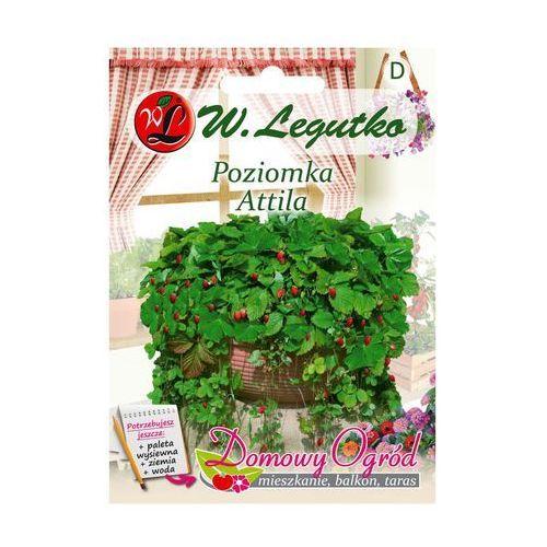 W. legutko Poziomka attila nasiona tradycyjne 0.1 g
