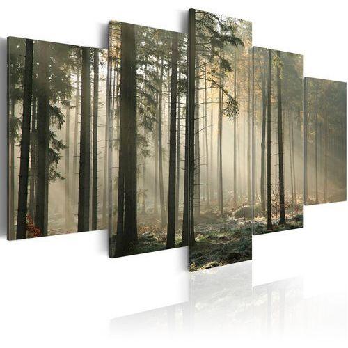 Obraz - Smuga światła w ciemnym lesie