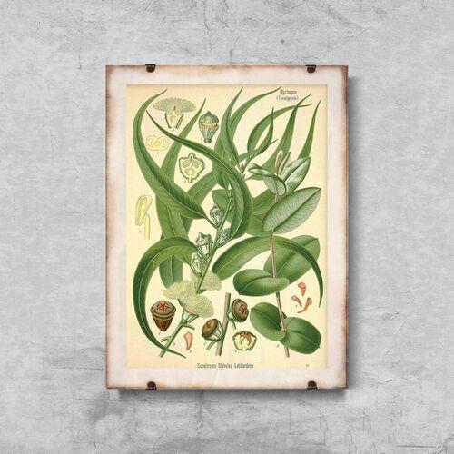Plakaty w stylu retro plakaty w stylu retro ilustracja eukaliptusa marki Vintageposteria.pl