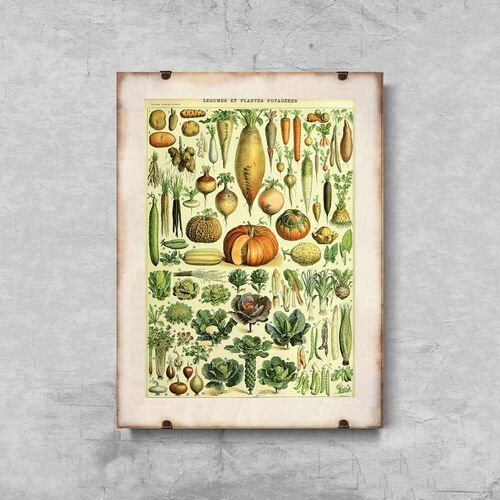 Plakat vintage do salonu plakat vintage do salonu rośliny 1909 adolphe millot marki Vintageposteria.pl