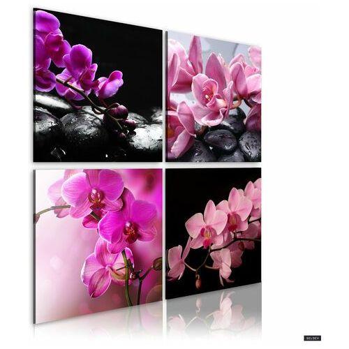 obraz - orquidiana (piękno kwiatów) 80x80 cm marki Selsey