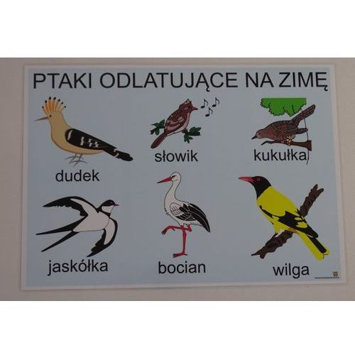 Ptaki odlatujące na zimę - plansza demonstracyjna marki Bystra sowa