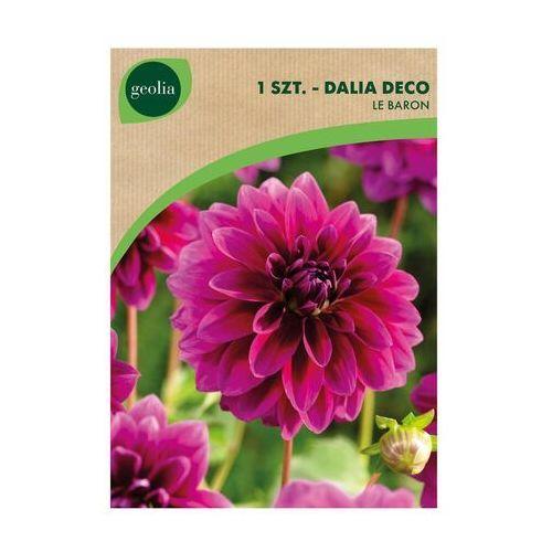 Dalia pomponowa le baron 1 szt. cebulki kwiatów marki Geolia