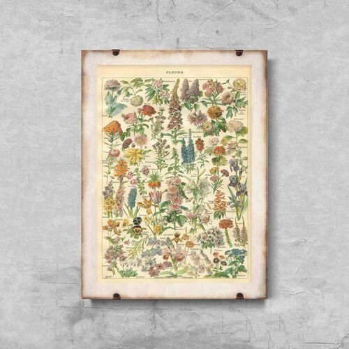 Plakat w stylu vintage Plakat w stylu vintage Kwiatowy nadruk Adolphe Millo
