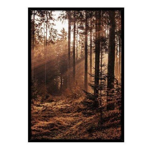 Obraz Retro forest 50 x 70 cm (5902841517103)