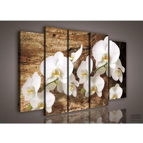 Obraz Białe Storczyki na brązowym tle PS414S12, PS414S12