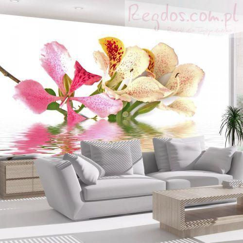 Fototapeta - kwiaty tropikalne - drzewo storczykowe (bauhinia) wyprodukowany przez Artgeist