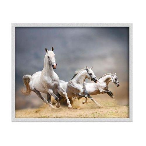 Knor Obraz konie 50 x 40 cm (5901554505148)