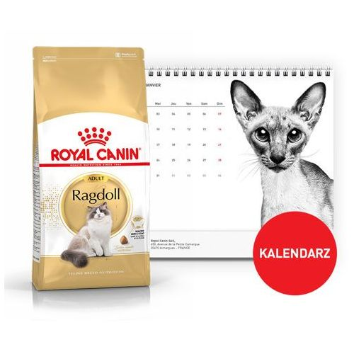 ragdoll adult 2kg + kalendarz 2018 marki Royal canin