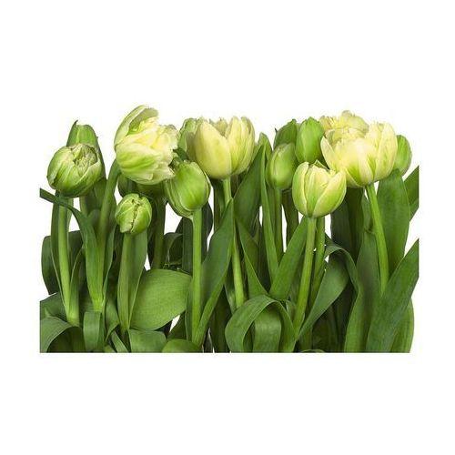 Komar Fototapeta tulip 368 x 368 cm