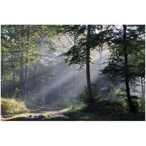 Deco-strefa – dekoracje w dobrym stylu Fototapeta słońce przedzierające się promieniami przez las fp 1618