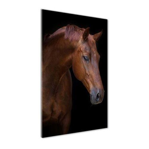 Foto obraz akrylowy do salonu Portret konia