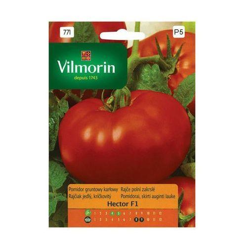 Pomidor gruntowy karłowy Hector 100mg Vilmorin (5907617320437)