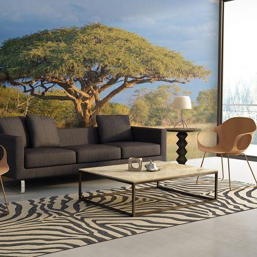 Fototapeta - afrykańska akacja - park narodowy hwange, zimbabwe marki Artgeist