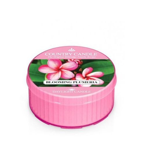 Country candle świeca blooming plumeria 35g marki Kringle candle