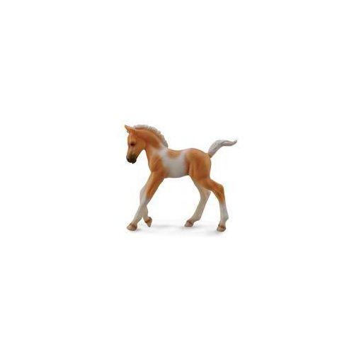 Źrebię rasy pinto idące (konie - m). darmowy odbiór w niemal 100 księgarniach! marki Collecta