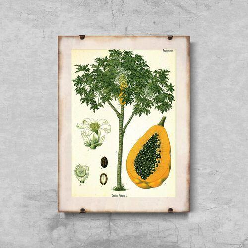 Plakat do pokoju Plakat do pokoju Antyczny botaniczny nadruk drzewa papai