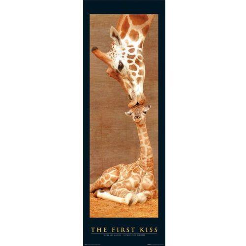 Żyrafy - Pierwszy Pocałunek - plakat