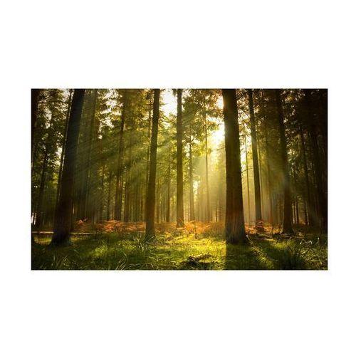 Consalnet Kanwa las o wschodzie 100 x 75 cm
