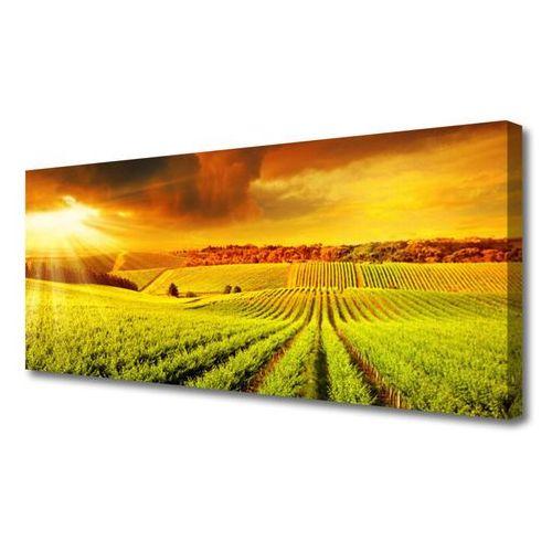 Obraz na płótnie pole zachód słońca krajobraz marki Tulup.pl