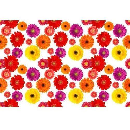 Wally - piękno dekoracji Wyprzedaż: fototapeta gerbery 110, 300x60cm, folia wall-art, wykończenie połysk
