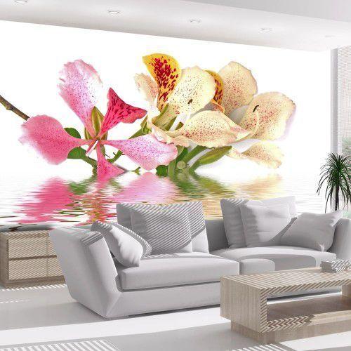 Fototapeta - kwiaty tropikalne - drzewo storczykowe (bauhinia) marki Artgeist