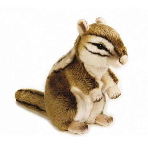 Wiewiórka syberyjska