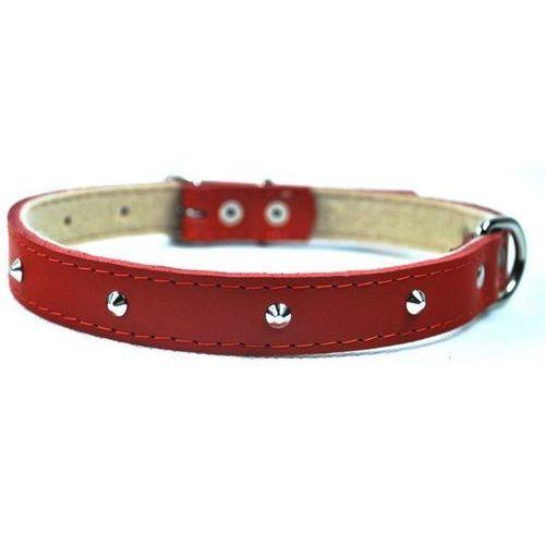 CHABA Obroża skórzana ćwiekowana kolor: czerwony 10mm / 30cm (5905133600729)