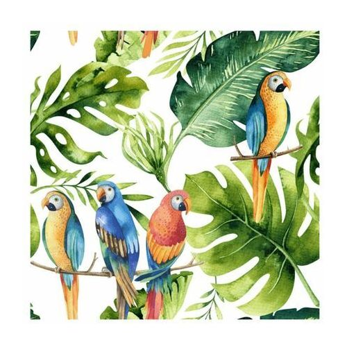 Panel kuchenny szklany Parrots white 60 x 60 cm Alfa-Cer (5902027035872)