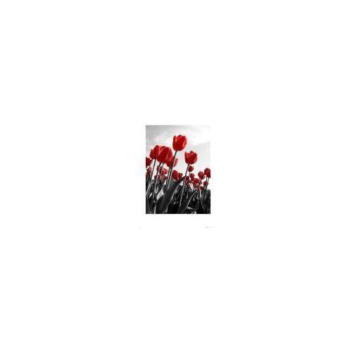 Tulips, Tulipan, Tulipany - reprodukcja (5028486126392)