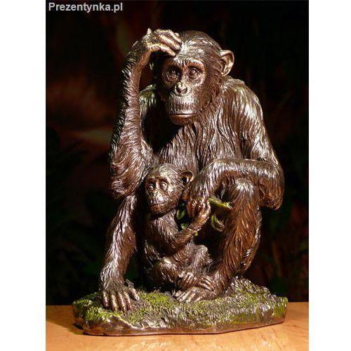 Orangutan z małym Veronese