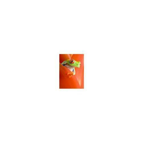 Żaba w Kwiecie - reprodukcja, RS0281 (5536708)