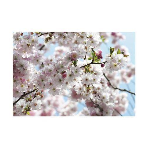 Komar Fototapeta papierowa spring (4036834085070)