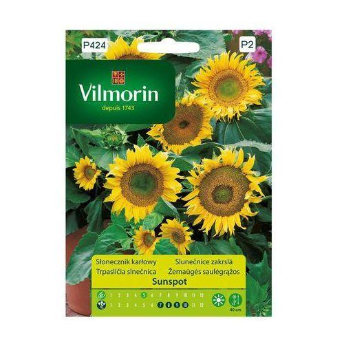 Słonecznik karłowy SUNSPOT nasiona tradycyjne 1 g VILMORIN, OYK321878