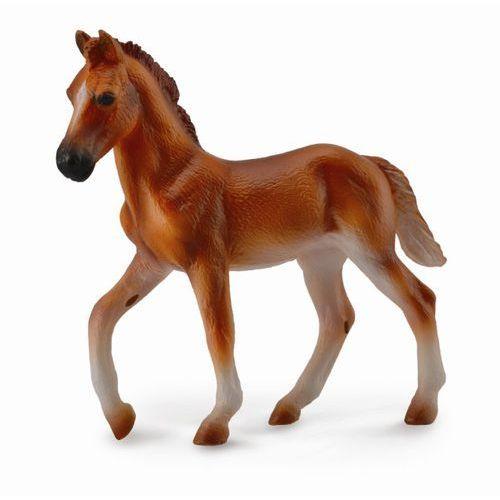 Koń peruwiański paso źrebię maści kasztan m marki Dante