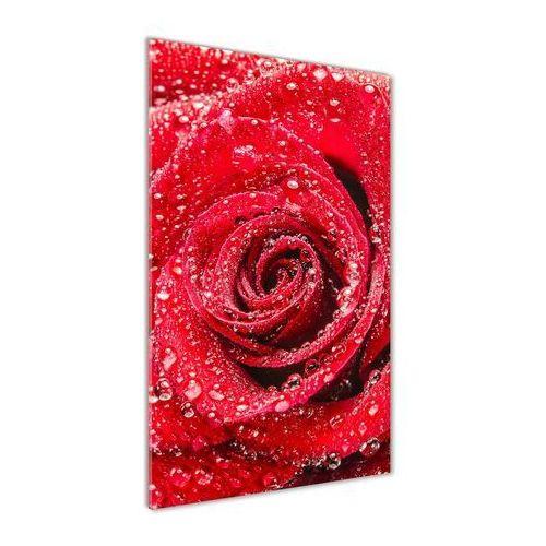 Foto obraz akrylowy do salonu Czerwona róża