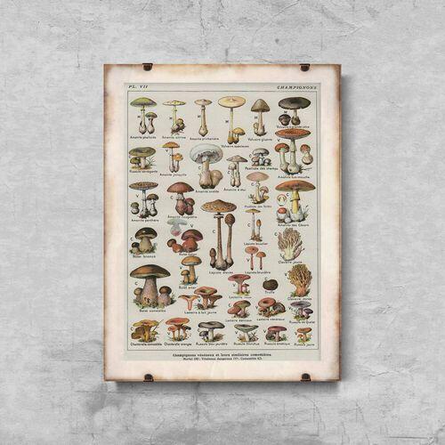 Vintageposteria.pl Plakat retro do salonu plakat retro do salonu botaniczny plakat grzybów pieczarek