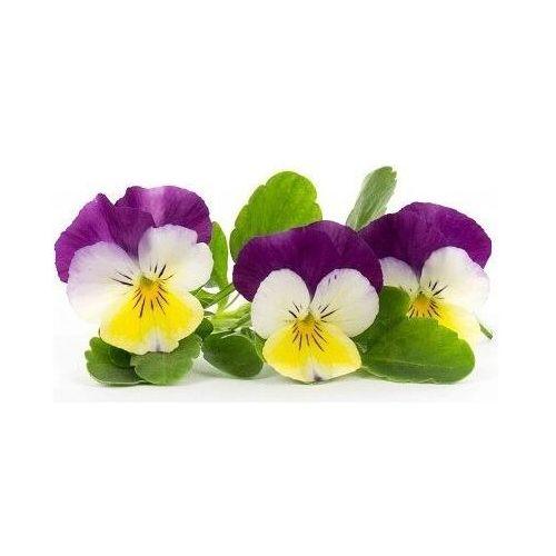Veritable Wkład nasienny lingot kwiaty jadalne bratki