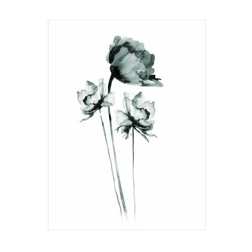 Art canvas Plakat czarna roza 30 x 40 cm (5901844220461)