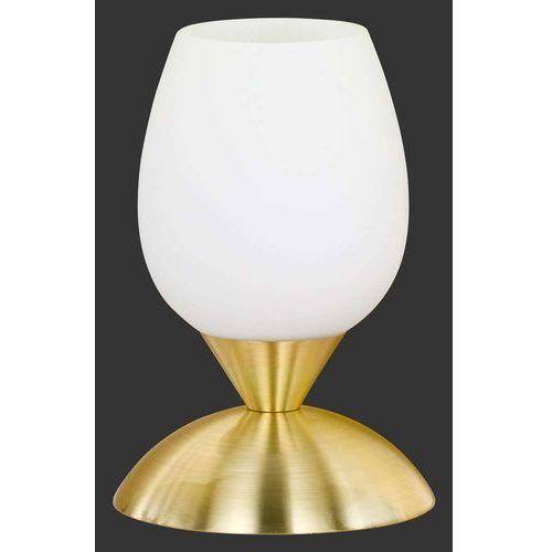 Trio reality Lampa stołowa cup mosiądz matowy, r59431008