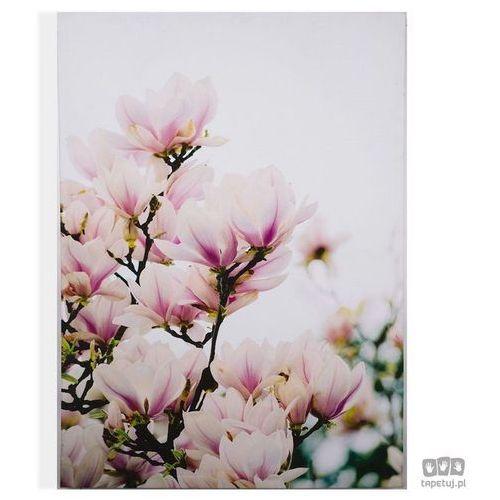 Obraz Kwitnące drzewo magnolii 104570, 104570