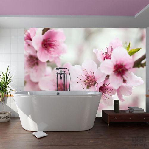 Murando Fototapeta kwitnąca wiśnia - różowe kwiatuszki 100406-93