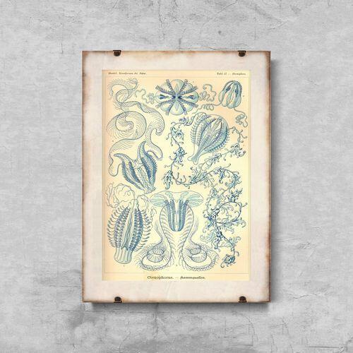 Plakat retro do salonu Plakat retro do salonu Ctnenophorae Ernst Haeckel