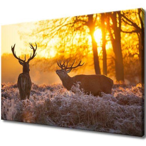 Obraz na Płótnie Jelenie poroże jelenie na łące ry