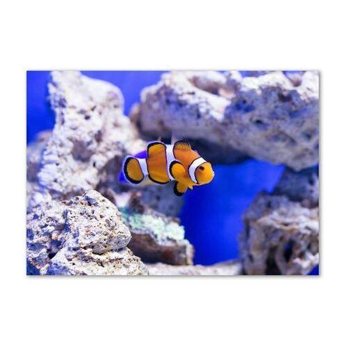Foto obraz akryl błazenek rafa koralowa marki Wallmuralia.pl