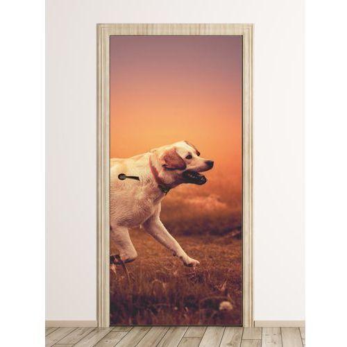 Wally - piękno dekoracji Fototapeta na drzwi pies biegnący po łące fp 6196
