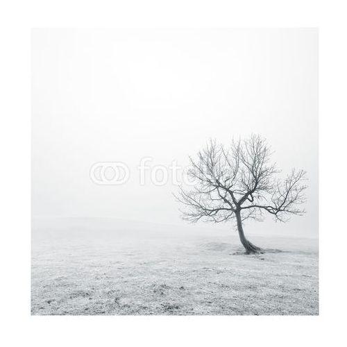Homeprint Czarno-biała polana