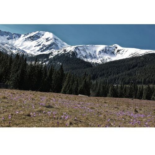 Fototapeta na ścianę pierwsze oznaki wiosny w Tatrach FP 5639